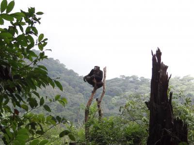 Chimpancé rehabilitado con el Western Peninsula National Park de fondo