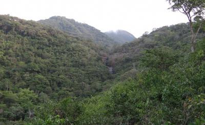 Selva primaria del Western Peninsula National Park adyacente a Tacugama